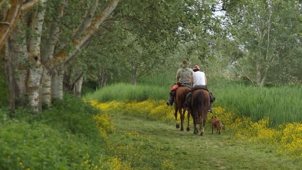 cerreto-guidi-cavallo-escursioni-equitazione